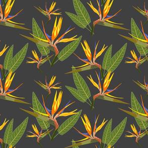 Birds of Paradise - Tropical Strelitzia #4 Charcoal Grey, large