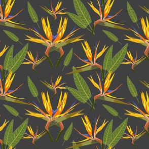 Birds of Paradise - Tropical Strelitzia #3 Charcoal Grey, large