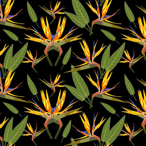 Birds of Paradise - Tropical Strelitzia #3 Black, large
