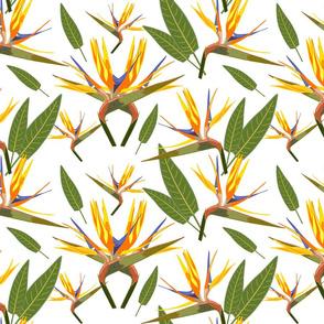 Birds of Paradise - Tropical Strelitzia #3 White, large