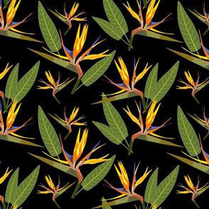 Birds of Paradise - Tropical Strelitzia #2 Black, large