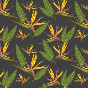 Birds of Paradise - Tropical Strelitzia #2 Charcoal Grey, large