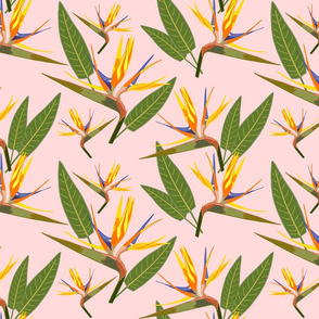 Birds of Paradise - Tropical Strelitzia #2 Sunset Pink, large