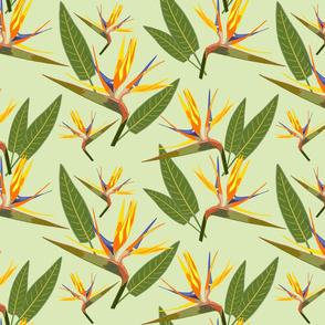 Birds of Paradise - Tropical Strelitzia #2 Cool Mint Green, large