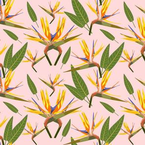 Birds of Paradise - Tropical Strelitzia #3 Sunset Pink, large