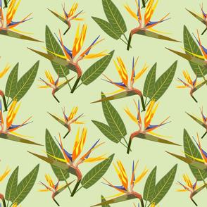 Birds of Paradise - Tropical Strelitzia #4 Cool Mint Green, large