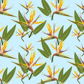 Birds of Paradise - Tropical Strelitzia #4 Sky Blue, large