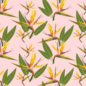 Birds of Paradise - Tropical Strelitzia #4 Sunset Pink, large