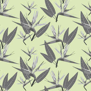 Birds of Paradise - Tropical Strelitzia #4 Greyscale on Cool Mint Green, large