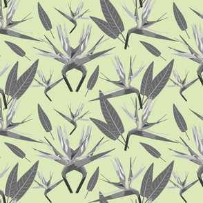 Birds of Paradise - Tropical Strelitzia #3 Greyscale on Cool Mint Green, large