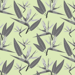 Birds of Paradise - Tropical Strelitzia #2 Greyscale on Cool Mint Green, large