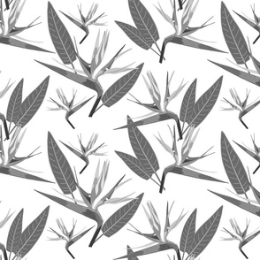 Birds of Paradise - Tropical Strelitzia #2 Greyscale on White, large