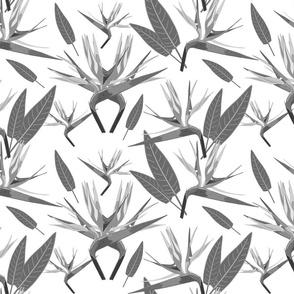 Birds of Paradise - Tropical Strelitzia #3 Greyscale on White, large