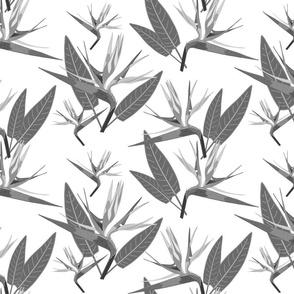 Birds of Paradise - Tropical Strelitzia #4 Greyscale on White, large