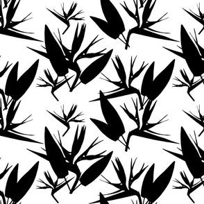 Birds of Paradise - Tropical Strelitzia #4 Black Silhouettes on White, large