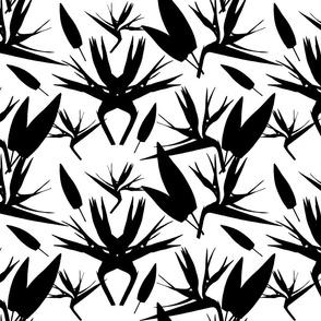 Birds of Paradise - Tropical Strelitzia #3 Black Silhouettes on White, large