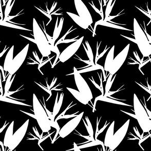 Birds of Paradise - Tropical Strelitzia #4 White Silhouettes on Black, large