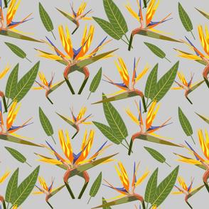 Birds of Paradise - Tropical Strelitzia #3 Silver Grey, large