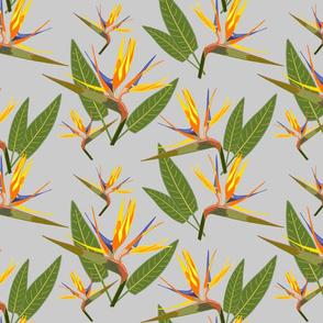 Birds of Paradise - Tropical Strelitzia #4 Silver Grey, large
