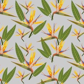 Birds of Paradise - Tropical Strelitzia #2 Silver Grey, large