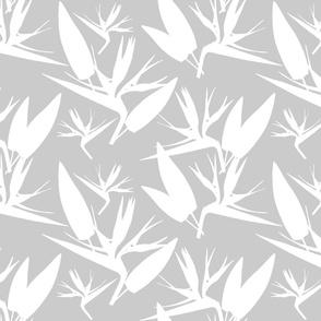 Birds of Paradise - Tropical Strelitzia #2 White Silhouettes on Silver Grey, large