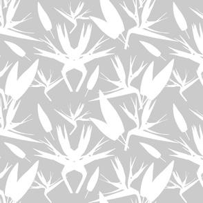 Birds of Paradise - Tropical Strelitzia #3 White Silhouettes on Silver Grey, large