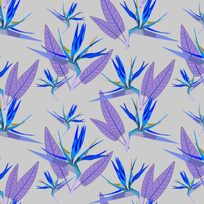 Birds of Paradise - Tropical Strelitzia #4 Blues on Silver Grey, large