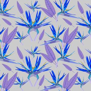 Birds of Paradise - Tropical Strelitzia #3 Blues on Silver Grey, large