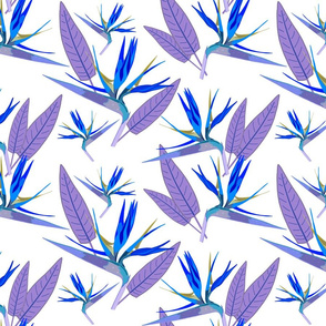 Birds of Paradise - Tropical Strelitzia #2 Blues on White, large
