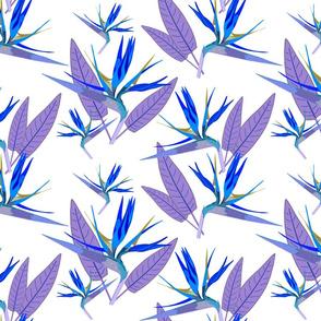 Birds of Paradise - Tropical Strelitzia #4 Blues on White, large