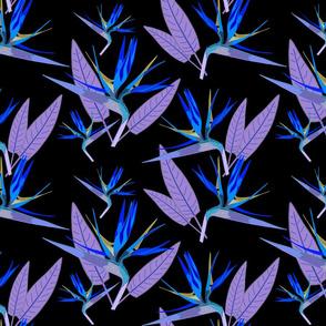 Birds of Paradise - Tropical Strelitzia #4 Blues on Black, large