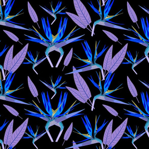 Birds of Paradise - Tropical Strelitzia #3 Blues on Black, large