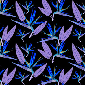 Birds of Paradise - Tropical Strelitzia #2 Blues on Black, large