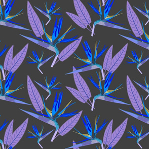 Birds of Paradise - Tropical Strelitzia #2 Blues on Charcoal Grey, large