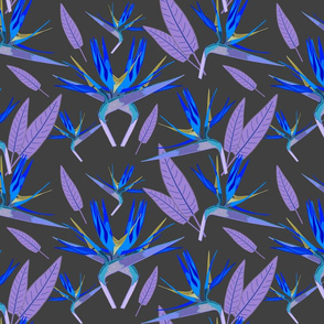 Birds of Paradise - Tropical Strelitzia #3 Blues on Charcoal Grey, large