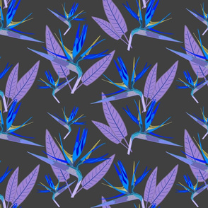 Birds of Paradise - Tropical Strelitzia #4 Blues on Charcoal Grey, large
