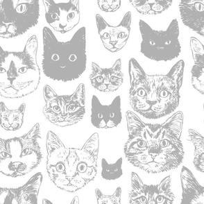 cats - grey