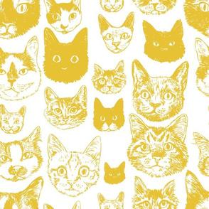 cats - mustard