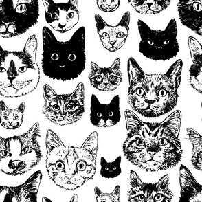 cats - black + white