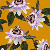 Passionfruitfloral
