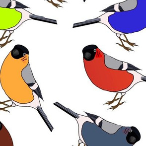Birds Primary Solid Colors Coordinate with Patterned Designs