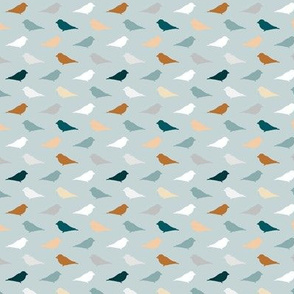 small birds white, brown blue grey on blue grey
