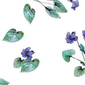 Violet - watercolor flowers