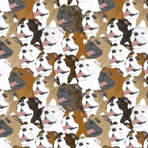 Bulldog portrait pack