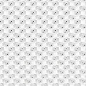 Small Coton de Tulear portrait pack