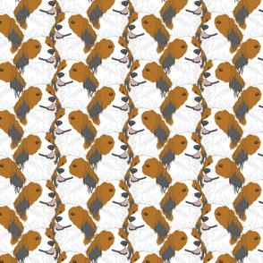 Kooikerhondje portrait pack