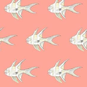 Banggai Cardinalfish lines on peach