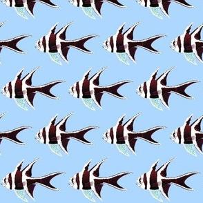 Banggai Cardinalfish reversed on light blue