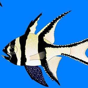 Banggai Cardinalfish on sea blue