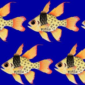 Pajama Cardinalfish on dark blue